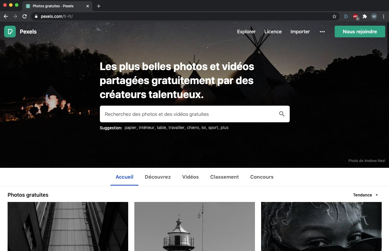 Pexels - Banque images - Sulidae